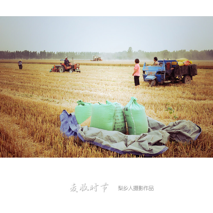 harvest in chinese rural area!this is a joy time over a year!