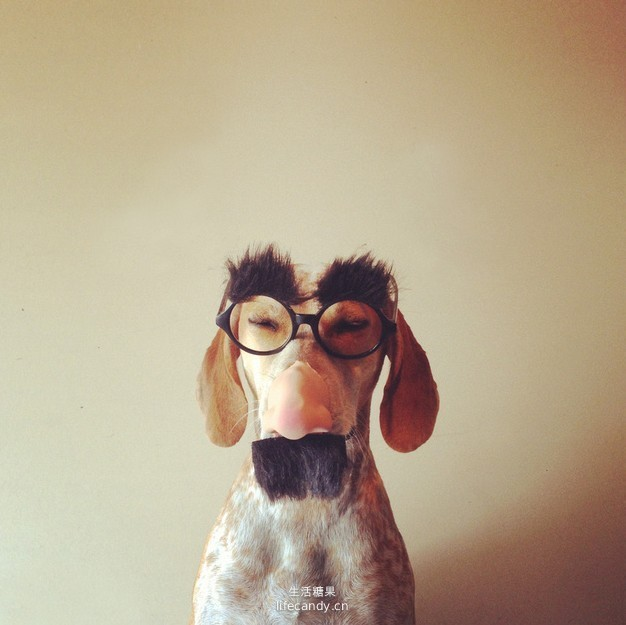Very Funny and Interesting Pictures(6) Can your dog do any tricks yet?