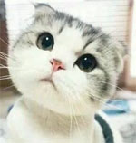 8 Super lovely cat expression images