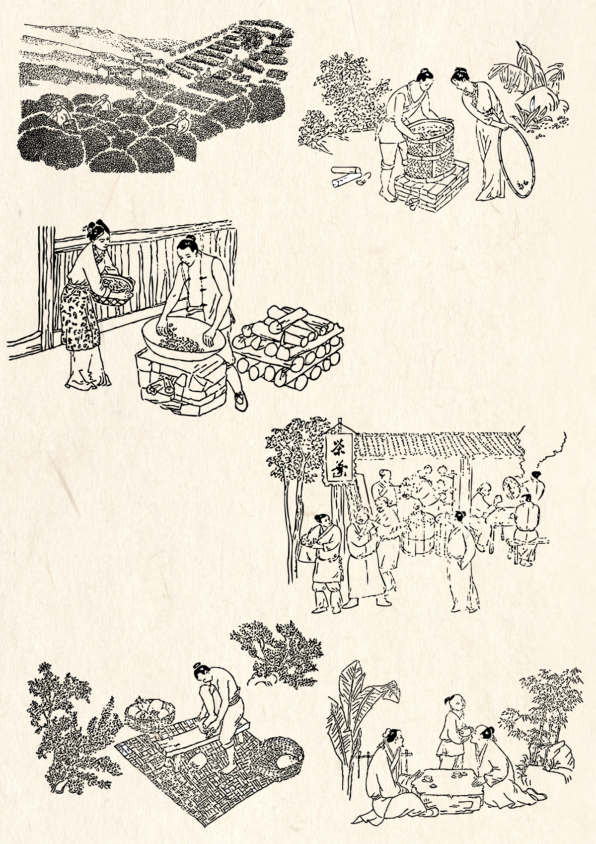 The ancient Chinese tea vector drawing material process line Illustrations Vectors AI ESP