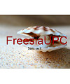 FreesiaUPC Font Download